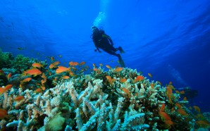The Best Scuba Diving Sites In India